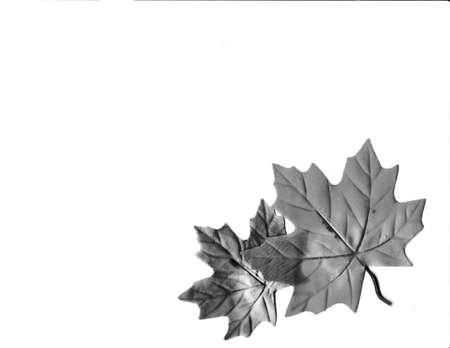 leaves photo