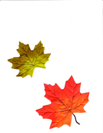 Two leaves photo
