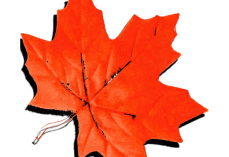Leaf Design photo