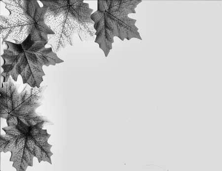 Seasons Cascade photo