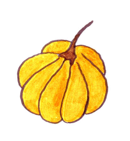Non computer generated hand drawn pumpkin illustration