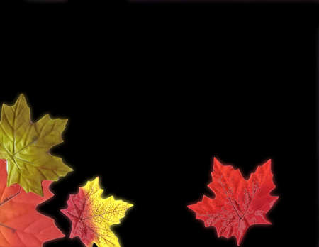 Holiday Fallen leaves photo