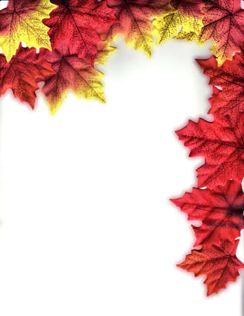 smoothed: Vivid Leaves with Smoothed Edges