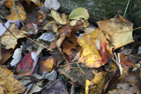 Leaves Spent Reklamní fotografie