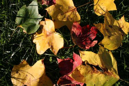 leaves Imagens