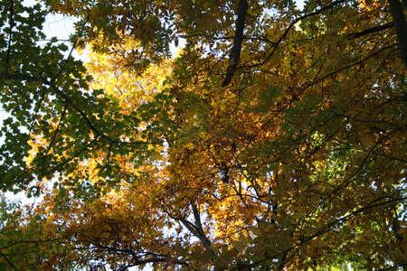 tree canopy Imagens