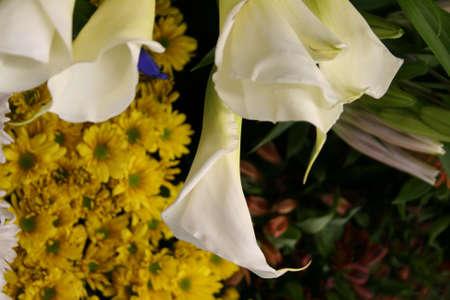 callas: callas Stock Photo