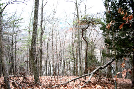 Desolate Winter Woods