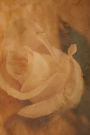 raggedy: antique rose parchment