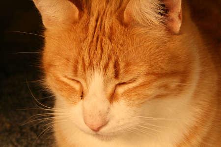 purring: Calm Cat