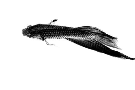 Black Fish Banco de Imagens