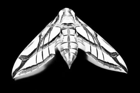 Moth Negative Reklamní fotografie