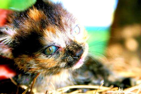 calico: Calico Cat