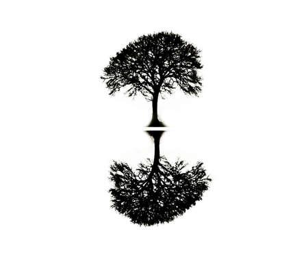나무 반사