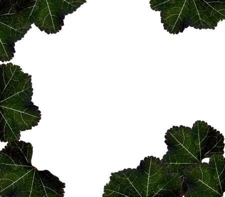 bordered: Leaf Bordered Background Design Stock Photo