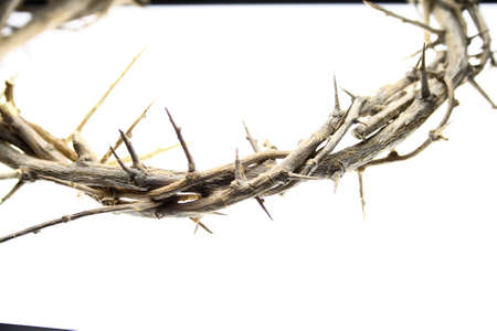 unedited: Unedited Crown of Thorns on white studio table