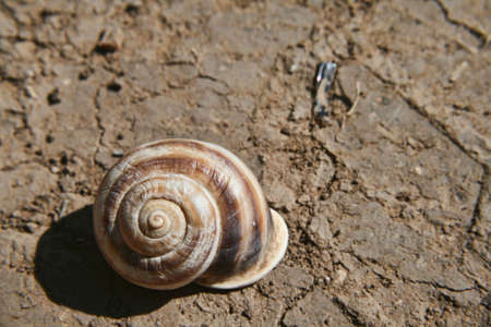 Snail and Earth Reklamní fotografie