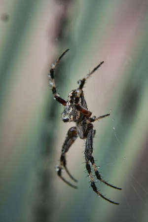 is poisonous: Poisonous Spider Stock Photo