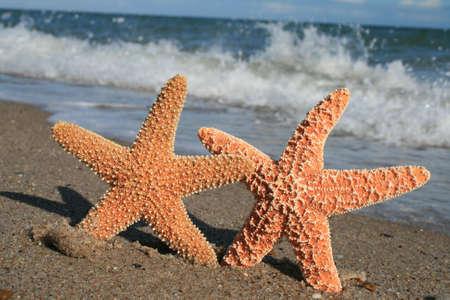 Starfish and Surf