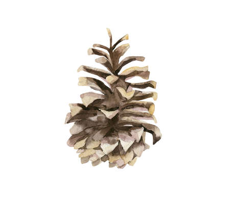 Watercolor realistic illustration of the pine cones from side view isolated on white background.