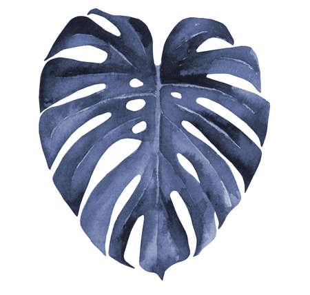 Blue monstera leaf. Watercolour illustration on white background.
