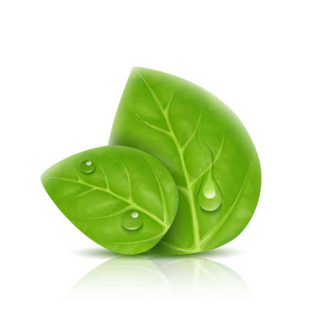 eco icons: two green leaves isolated with drops of water, shadow and reflection