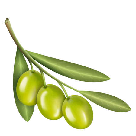 set of three green olives with branch and leaves isolated