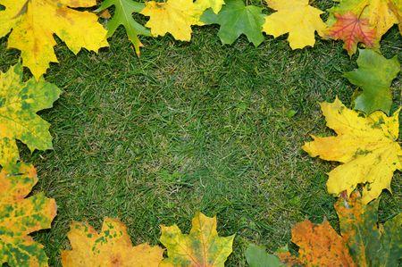 Autumn leaves on the grass in a frame Reklamní fotografie
