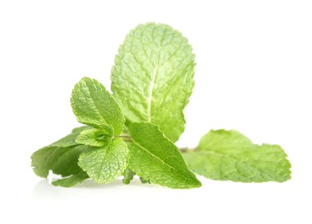 Mint leaves isolated against a white background