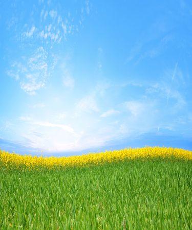 canola fields and green grass Standard-Bild