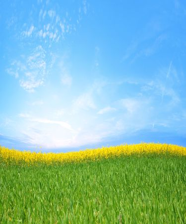canola fields and green grass Stock Photo