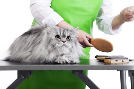cat grooming: Grooming