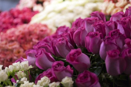 Street flower market. Different roses  photo