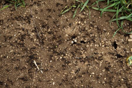 A group of ants introducing some food into their hole photo