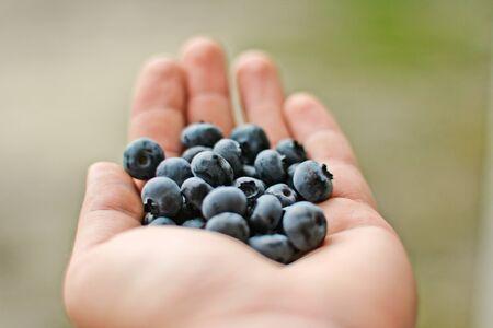 bilberries: bilberries on the hand