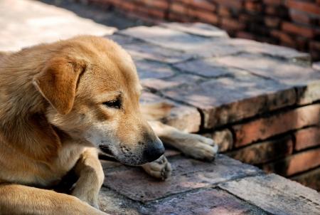 spiritless: Dog