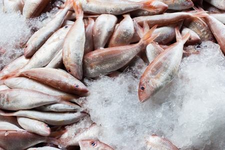 fresh fish on ice at the seafood market photo