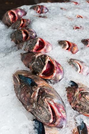 Fresh fish on ice at the sea market photo