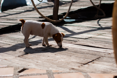 Dog Sniffing on the Ground at the restaurant on island Stock Photo