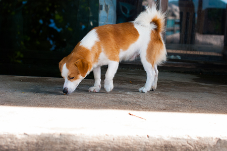 Dog Sniffing on the Ground at restaurant