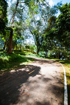 Country road running through tree photo