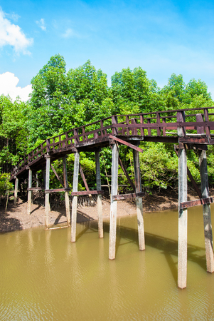 Bridge in the forest mangrove at Ranong, Thailand. photo