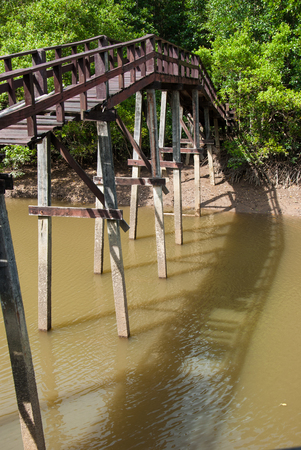 Bridge in the forest mangrove at Ranong, Thailand  photo