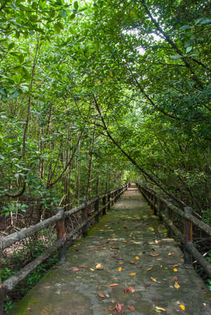 Pathway in the forest mangrove at Ranong, Thailand  photo