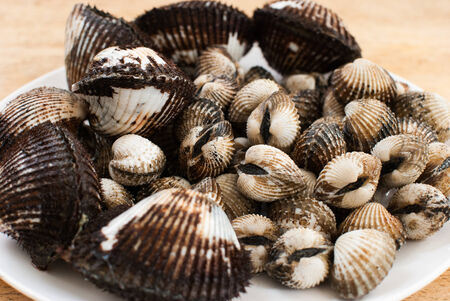 cockle: Blood Cockle or scallop on the chopping block Stock Photo