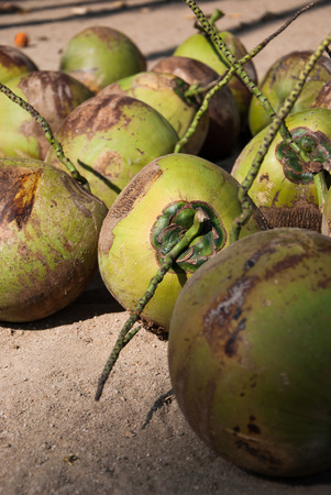 Pile of green coconuts on the Floor photo