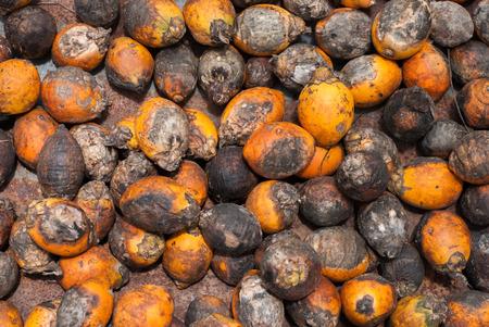 Betel Nut or Areca Nut background , Close up photo