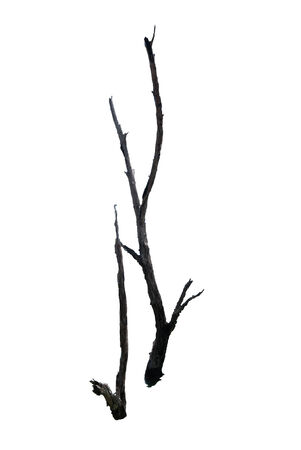 barren: Barren tree on isolated background in the sea