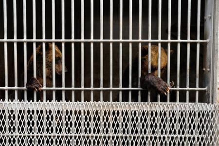 zoologico: tener en una jaula en el zool�gico