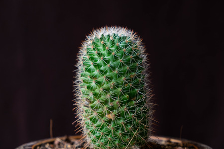Close up Cactus on black background. Stock Photo